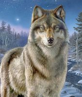 "Картина по номерам ""Ночной волк"" (400х500 мм)"