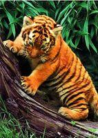 """Пазл """"В мире животных. Тигренок в лесу"""" (1000 элементов)"""