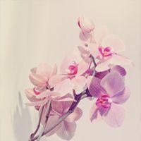 """Репродукция на холсте """"Орхидея"""""""