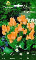 """Тюльпан Грейга многоцветковый """"Орандж Торонто"""""""