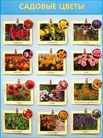 Садовые цветы. Плакат