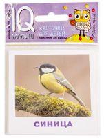 Птицы. Набор карточек для детей