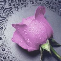 """Алмазная вышивка-мозаика """"Розовая Роза"""""""