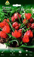 """Тюльпан хумилис многоцветковый """"Лиллипут"""""""