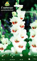"""Гладиолус крупноцветковый """"Фиорентина"""""""