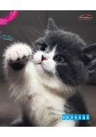 """Тетрадь в клетку """"Котик"""" 48 листов"""