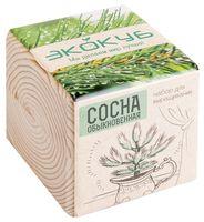"""Набор для выращивания растений """"Экокуб. Сосна"""""""