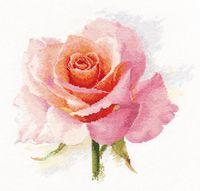 """Вышивка крестом """"Дыхание розы. Нежность"""" (240х240 мм)"""