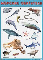 Развивающие плакаты. Морские обитатели