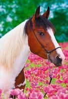 """Пазл """"В мире животных. Лошадь в цветах"""" (250 элементов)"""