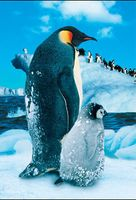 """Пазл """"В мире животных. Пингвин с малышом"""" (250 элементов)"""