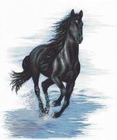 """Вышивка крестом """"Черный конь"""" (400х450 мм)"""