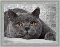 """Алмазная вышивка-мозаика """"Британский кот"""""""