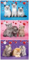 """Альбом для рисования """"Три котенка"""" (А4; 24 листа; в ассортименте)"""