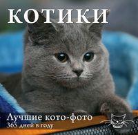 Календарь. Котики. Лучшие кото-фото. 365 дней в году (Оформление 1)