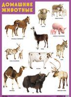 Развивающие плакаты. Домашние животные