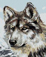 """Картина по номерам """"Серый волк"""" (500х400 мм)"""